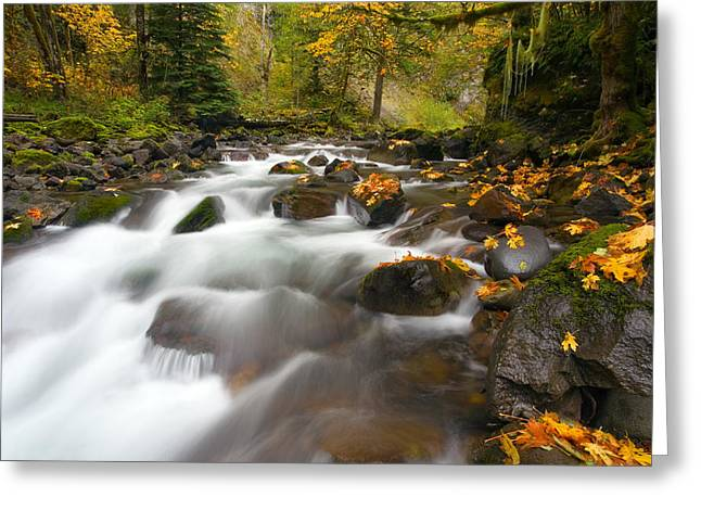 Autumn Passages Greeting Card by Mike  Dawson