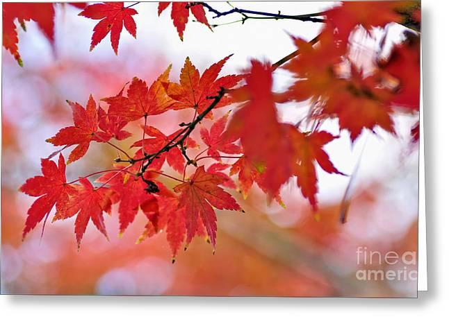 Autumn Pastel Greeting Card by Kaye Menner