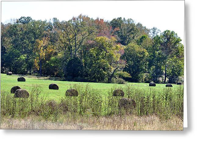 Hay Bales Greeting Cards - Autumn Pastures Greeting Card by Jan Amiss Photography