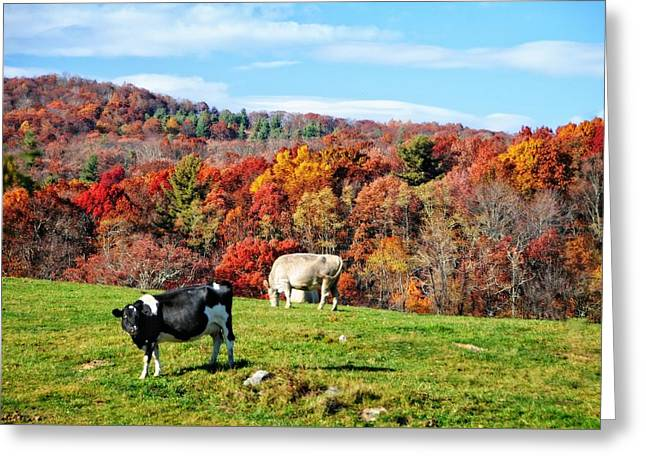 Autumn Pastures Greeting Card by Lynn Bauer
