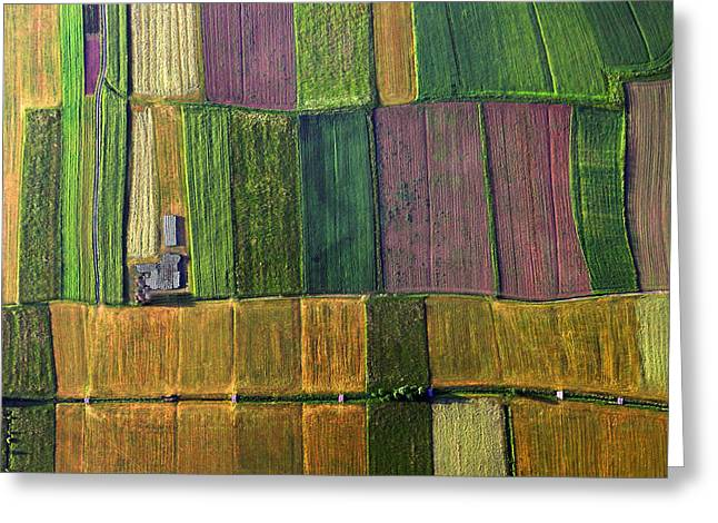 Aerials Greeting Cards - Autumn Patchwork Greeting Card by Matjaz Cater