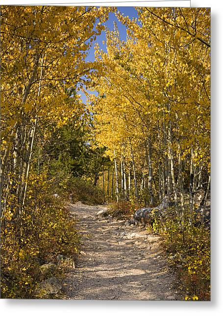 Winding Greeting Cards - Autumn Path Greeting Card by Andrew Soundarajan