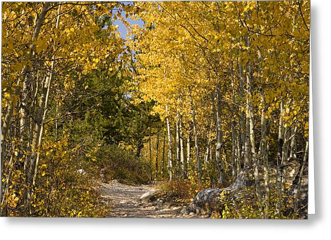 Autumn Path Greeting Card by Andrew Soundarajan