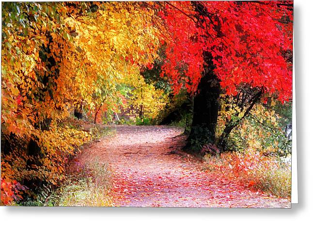 Best Sellers -  - Reflections Of Trees In River Greeting Cards - Autumn Path II Greeting Card by William Carroll