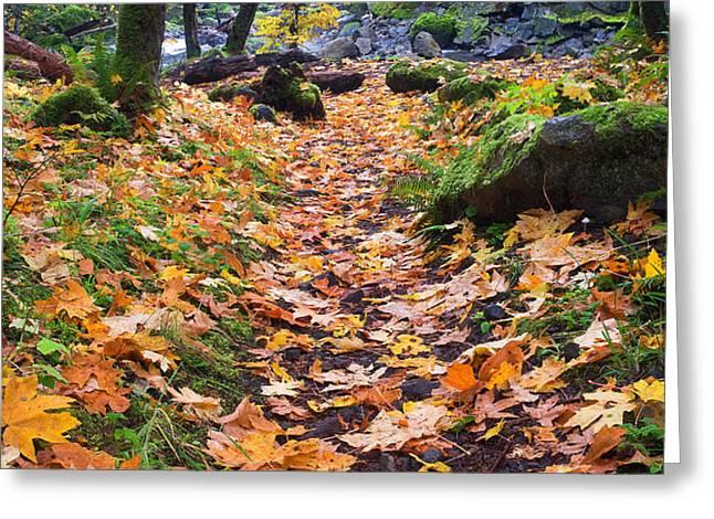 Autumn Path Greeting Card by Mike  Dawson
