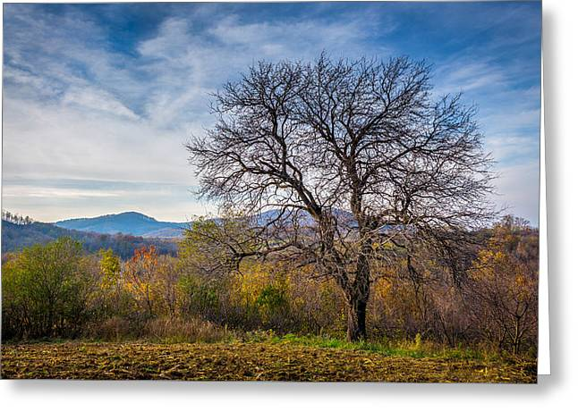 Fall Colors Greeting Cards - Autumn Peer Tree Greeting Card by Danilo Stefanovic