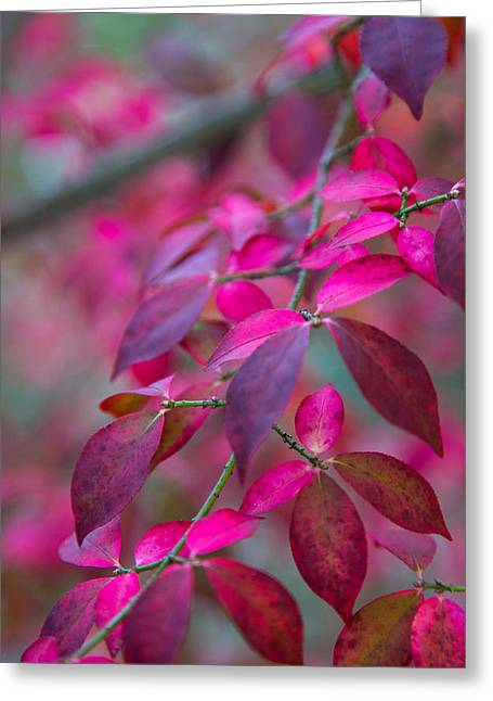 Autumn Pink And Purple Greeting Card by Karol Livote