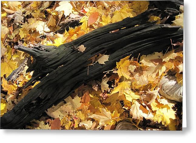 Autumn Poetry  Greeting Card by Leon Zernitsky