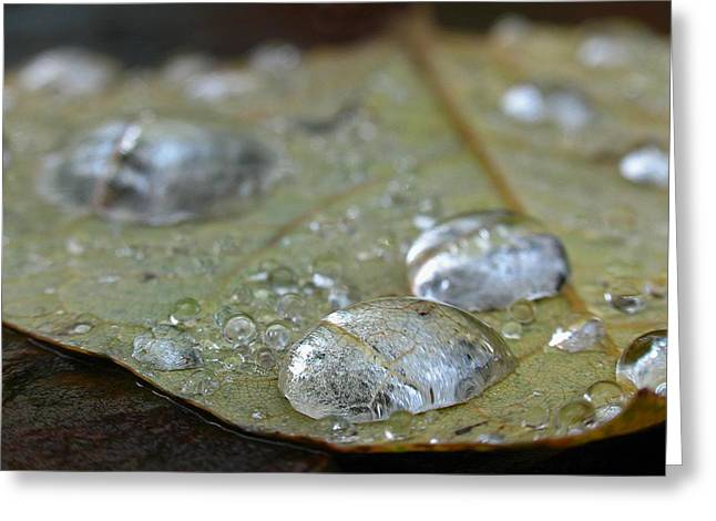 Rain Droplet Photographs Greeting Cards - Autumn Rain Greeting Card by Juergen Roth