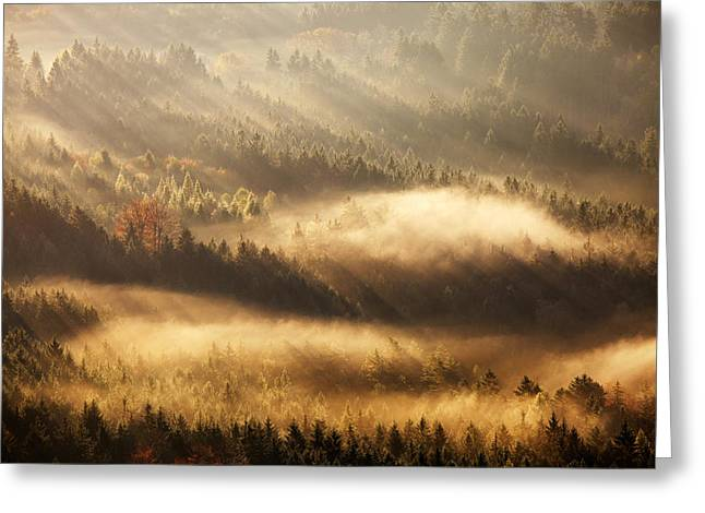 Fall Trees Greeting Cards - Autumn Rays Greeting Card by Martin Rak