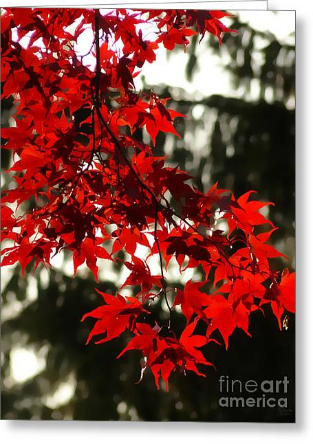 Jeff Breiman Greeting Cards - Autumn Red Greeting Card by Jeff Breiman