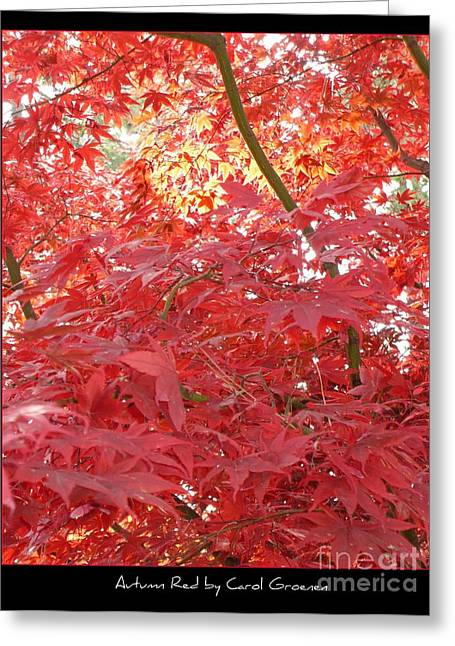 Autumn Red Poster Greeting Card by Carol Groenen
