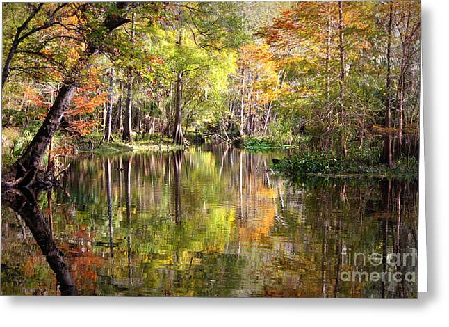 Swampland Greeting Cards - Autumn Reflection on Florida River Greeting Card by Carol Groenen