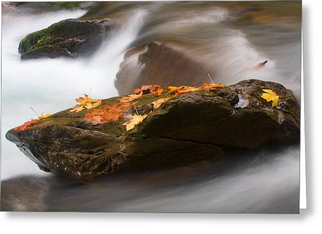 Leafs Greeting Cards - Autumn Resting Place Greeting Card by Mike  Dawson