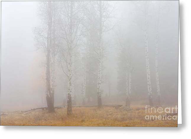 Fog Greeting Cards - Autumn Reveals Greeting Card by Mike  Dawson
