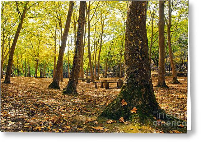Autumn Scenery Greeting Card by Carlos Caetano