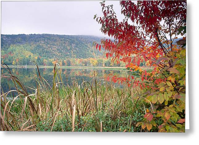Autumn Scenic Acadia National Park Maine Greeting Card by George Oze