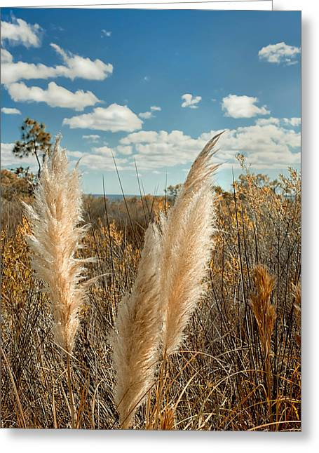 Autumn Seat Oats  Greeting Card by Debra Forand