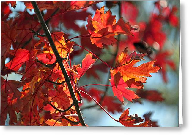 Fallscape Greeting Cards - Autumn Series Greeting Card by Suzanne Gaff