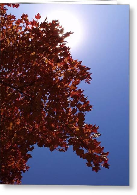 Autumn Sky I Greeting Card by Anna Villarreal Garbis