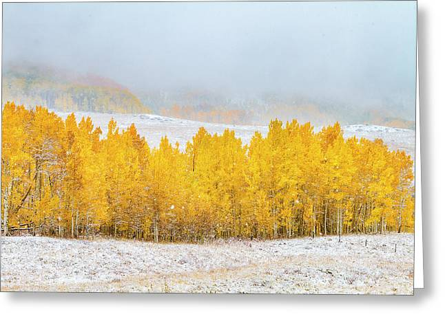 Autumn Snowstorm Greeting Card by Teri Virbickis