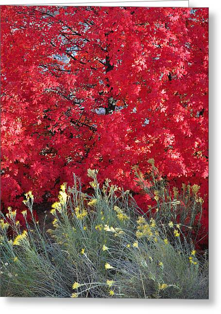Autumn Splendor In Zion National Park Greeting Card by Bruce Gourley