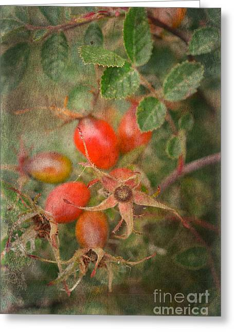 Print Photographs Greeting Cards - Autumn Still Life With Rose Hip Greeting Card by Alexandra Lavizzari