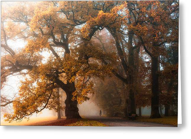 Fall Trees Greeting Cards - Autumn Stories #1 Greeting Card by Heiko Gerlicher