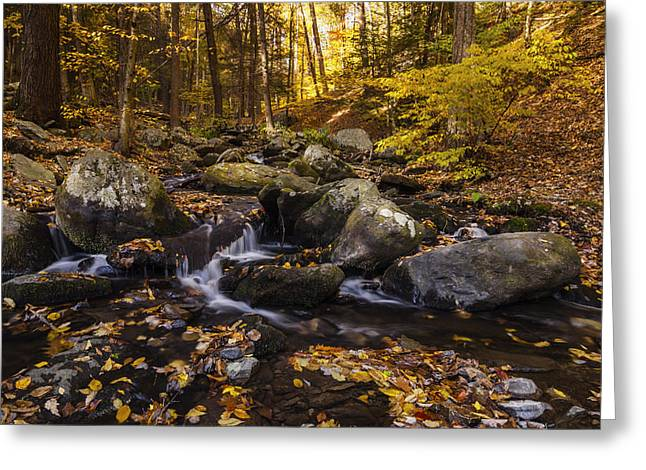 Overcast Day Greeting Cards - Autumn Stream in Bushkill Falls State Park Pennsylvania USA Greeting Card by Vishwanath Bhat