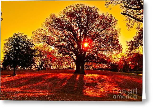 Autumn Sun And Shadows Greeting Card by E Robert Dee