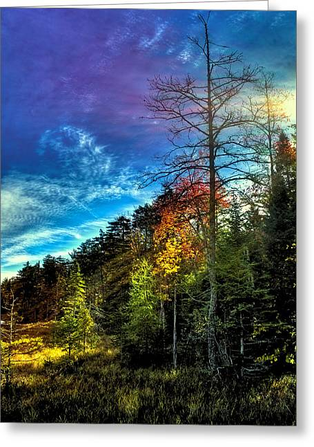 The Trees Greeting Cards - Autumn Sunlight in the Adirondacks Greeting Card by David Patterson