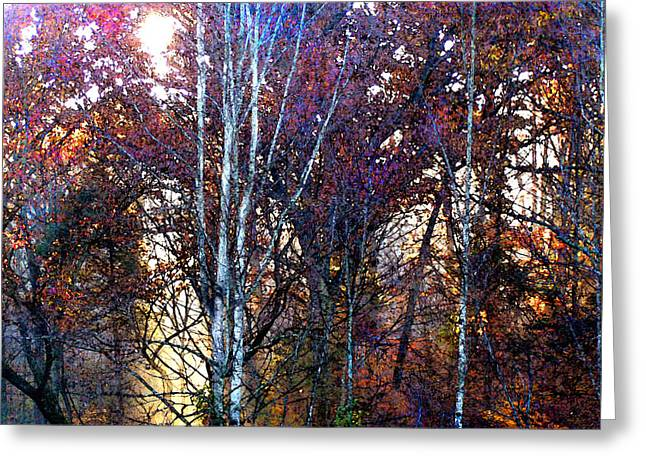autumn sunlight Greeting Card by Jane Schnetlage