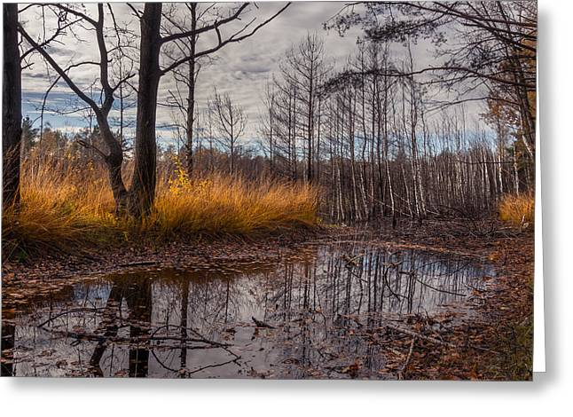 Autumn Swamp Greeting Card by Dmytro Korol