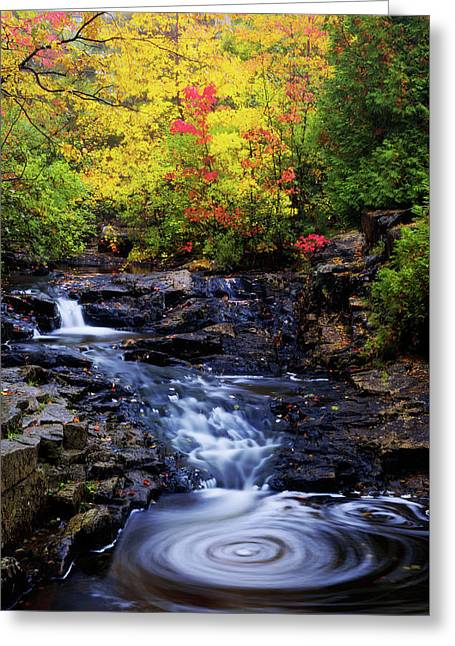 Autumn Swirls Greeting Card by Chad Dutson