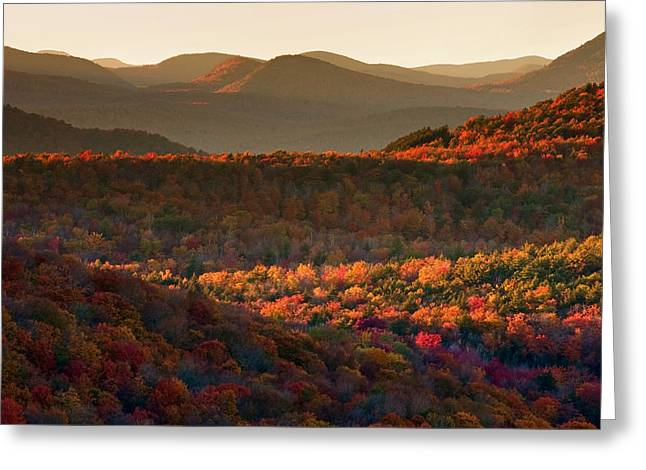 Best Sellers -  - Prospects Greeting Cards - Autumn Tapestry Greeting Card by Neil Shapiro