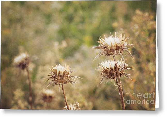 Autumn Thistles Greeting Card by Cindy Garber Iverson