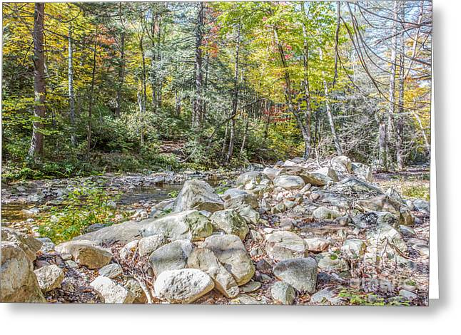 Autumn Trail Greeting Card by A New Focus Photography