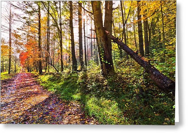 Autumn Trail Greeting Card by Debra and Dave Vanderlaan