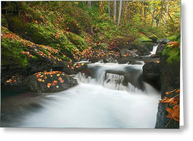 Scattered Greeting Cards - Autumn Treasure Greeting Card by Mike  Dawson