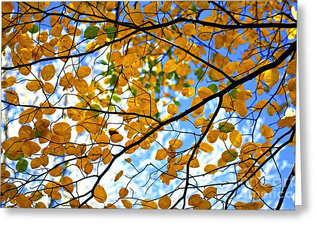 Round Leaves Greeting Cards - Autumn tree branches Greeting Card by Elena Elisseeva
