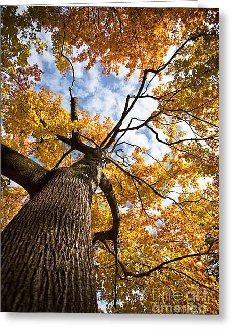 Field Rocks Greeting Cards - Autumn Tree Greeting Card by Nailia Schwarz