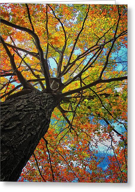Autumn Tree Greeting Card by Peg Runyan