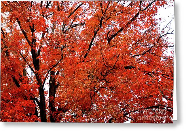 Indiana Autumn Greeting Cards - Autumn Treetop Greeting Card by Veronica Wiggins