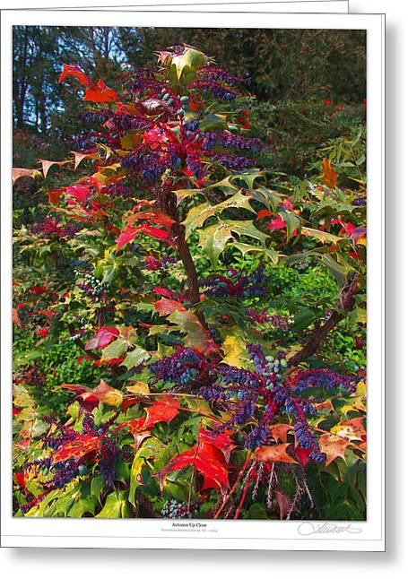Autumn Up-close Greeting Card by Lar Matre