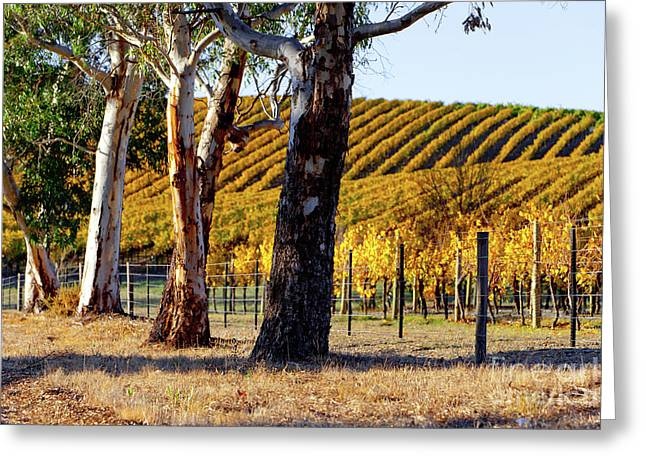 Autumn Vines Greeting Card by Bill Robinson