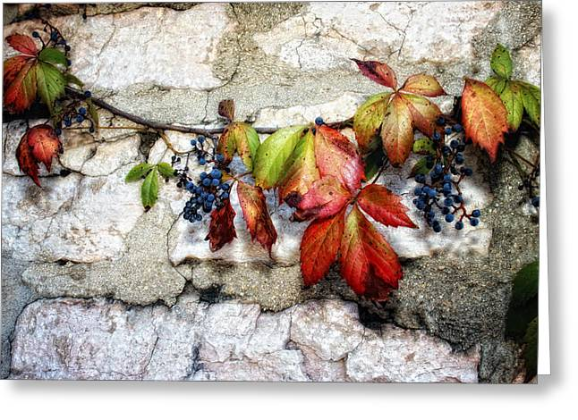 Recently Sold -  - Berry Greeting Cards - Autumn Vines Greeting Card by Van Sutherland