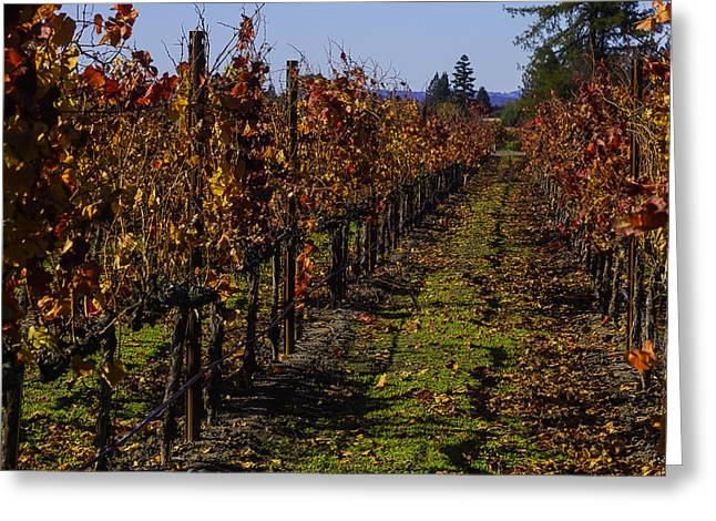 Autumn Vineyard Colors Greeting Card by Garry Gay