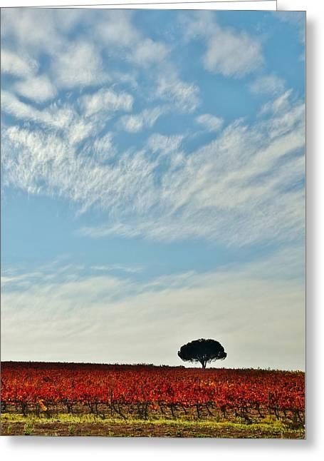 Winelands Greeting Cards - Autumn Vineyard Greeting Card by Werner Lehmann