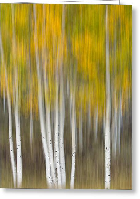 Autumn Was A Blur Greeting Card by Patricia Davidson