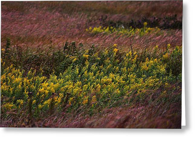 Tallgrass Prairie National Preserve Greeting Cards - Autumn Wind Blowing Golden Rod Greeting Card by Jim Richardson